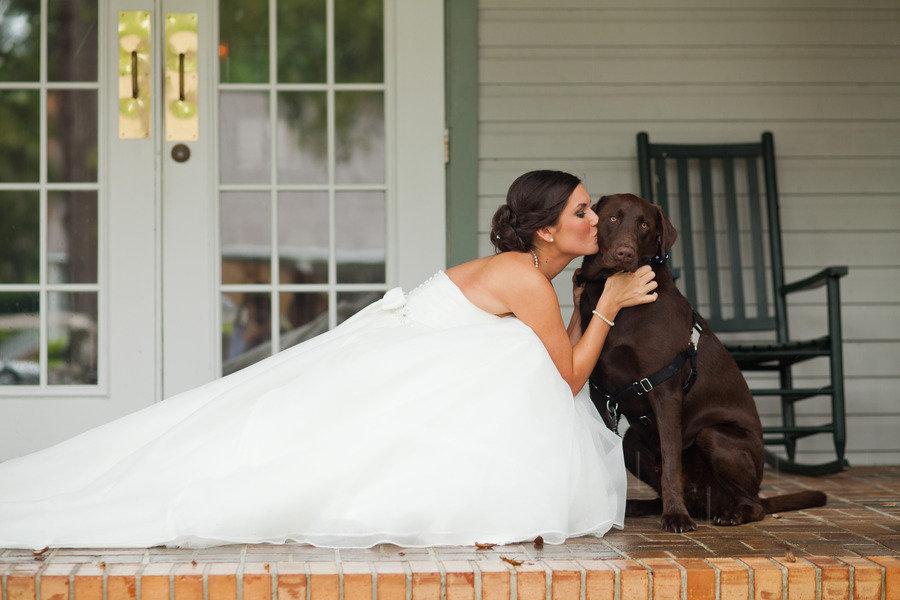 Šunys vestuvėse