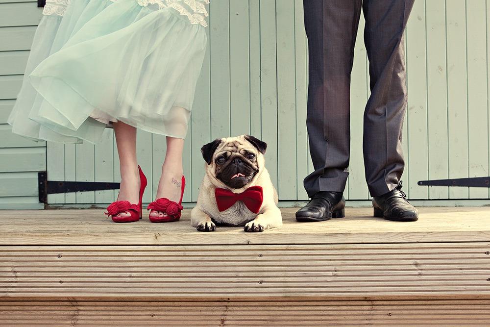 Šunys ir vestuvės